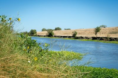 dwr-yolo-bypass-smelt-action