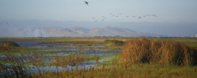 suisun-marsh-by-dfw-sliderbox