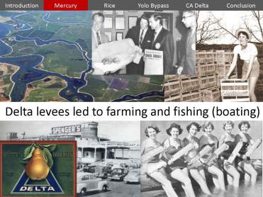USGS Mercury Rice Delta_Page_15