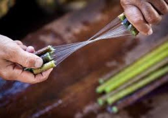 Lotus fiber extraction at a silk factory In Paw Khon village, Inle Lake.  Once a stem is picked, its fibers are extracted wi… | Weaving, Plant  fibres, Hand spinning