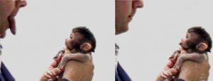 makak_neonatal_imitation