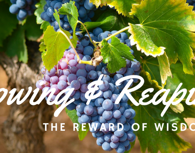 Sowing and Reaping – Whether Intentional and Random Wisdom is Needed!