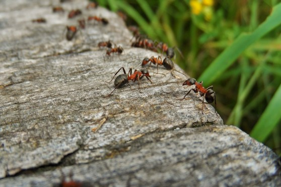 Ant Proverbs 6:6