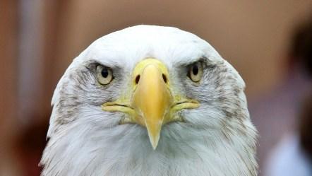 Visionary Leaders - Eagles