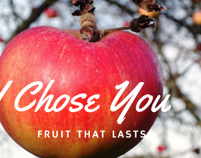 I Am the Vine You are the Branches – Fruit that Lasts
