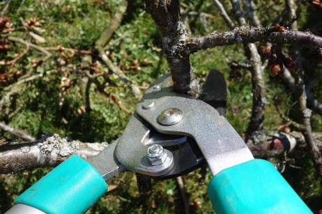 Pruning for fruit