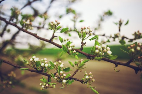 Blossoms of promise