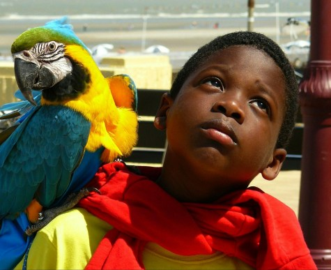 Colourful parrot and boy