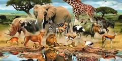 تفسير حلم رؤية الحيوانات في المنام