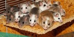 تفسير رؤية القطط والفئران في الحلم