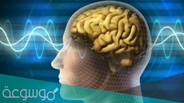 هل يستمر الدماغ في العمل