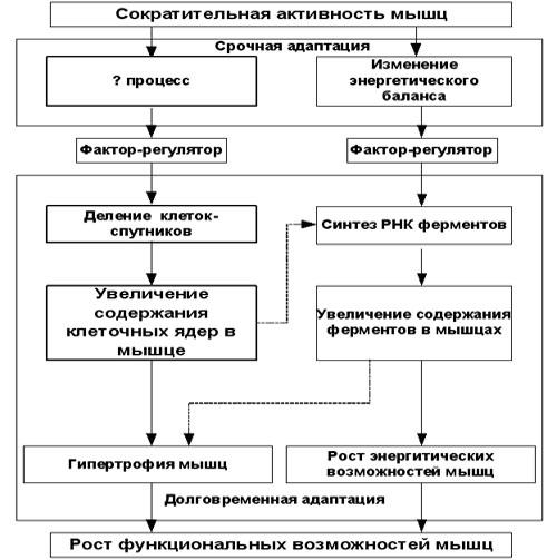 Вадим Протасенко / рисунок 2