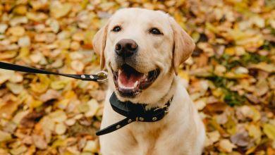 Best Dog Shock Collar Black Friday Deals 2019