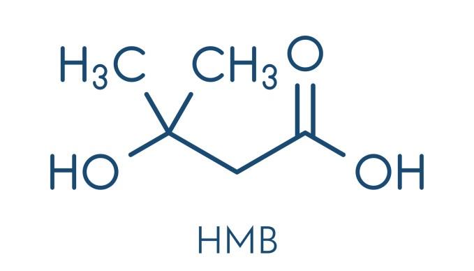 HMBの構成元素