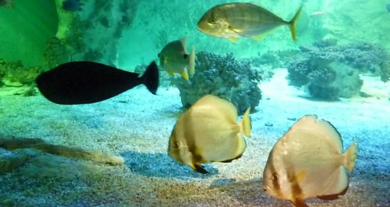 aquarium11