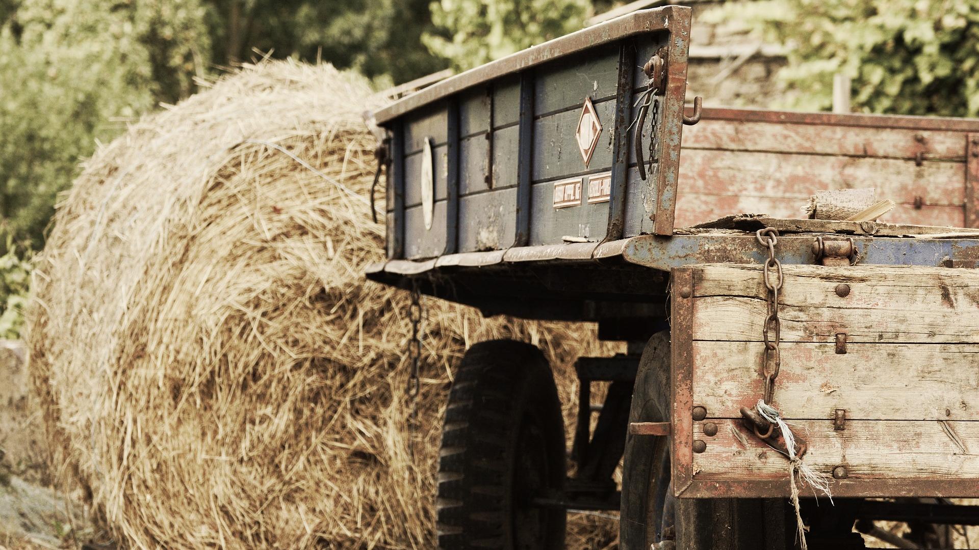 medio-rural-destinara-6-millones-de-euros-a-instalaciones-y-equipamientos-de-regimen-asociativo-1920