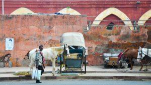 Delhi #5