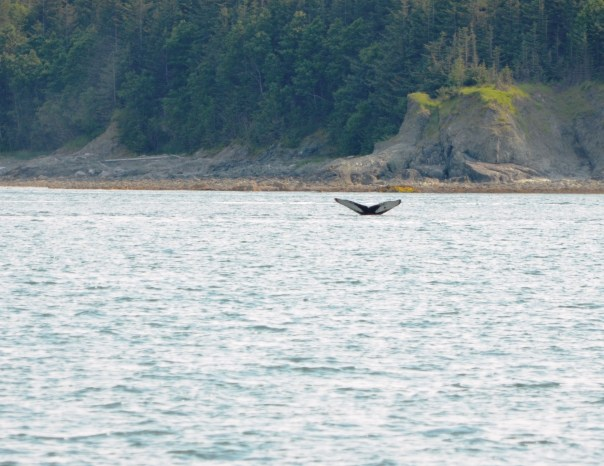 "Look closely - meet ""Spot"" the Humpback whale."