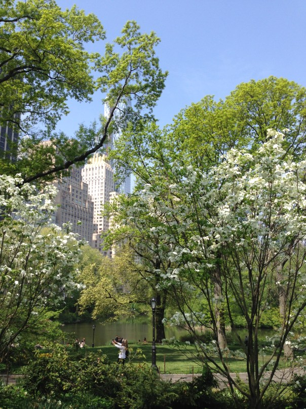 Central Park from ground level. You can't see them here - but colorful tulips are in bloom everywhere.