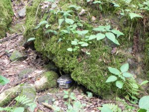 A typical hidden cache, in a camo-wrapped disguised box. We pulled this out to demonstrate, but generally, they are hidden behind rocks, under leaves, tucked in crevasses, hanging from a branch, concealed in a log, or sometimes placed in a magnetized container and stuck behind something metal.  You will have to look!