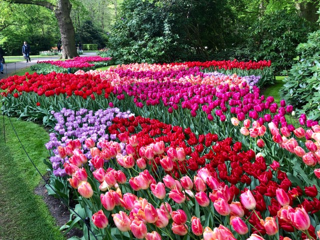 Beautiful Keukenhof Gardens.