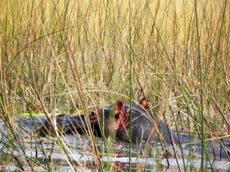 Africa.Hippo.DSCN3846