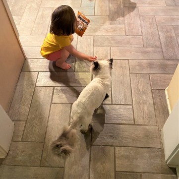 2.make sure the right cat gets the right treat