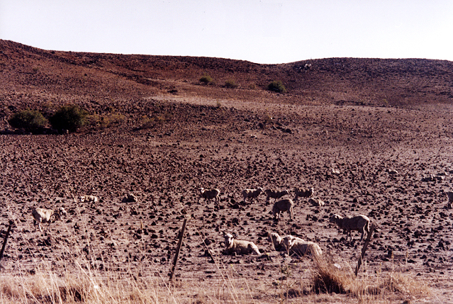 Monaro under drought, summer 2002