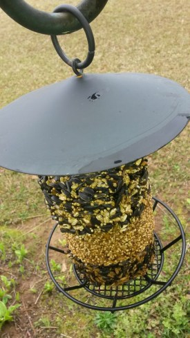 BIRD FEEDER (FULL) 2