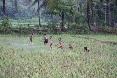 Kids playing in the rice paddy during a rain shower