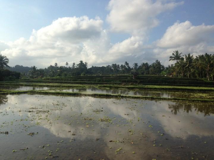 rice-field-terrace-ubud-bali-05