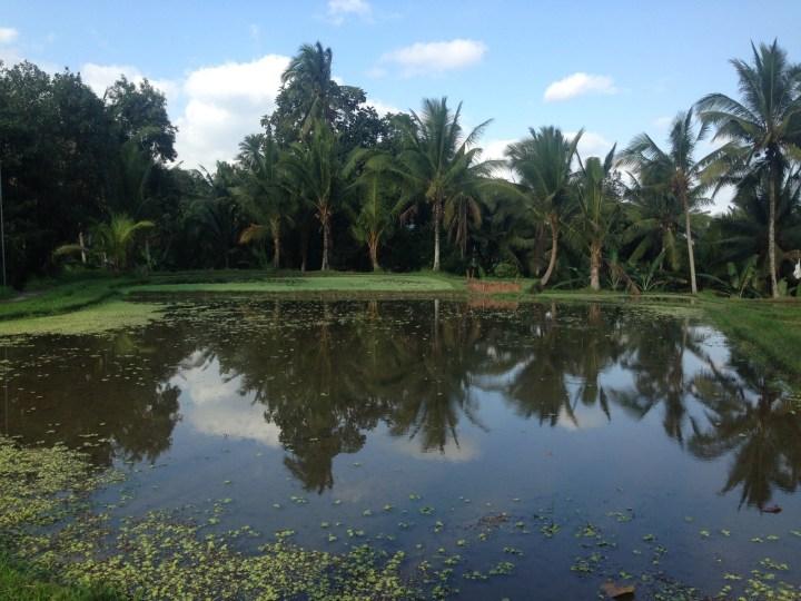 rice-fields-ubud-bali-04