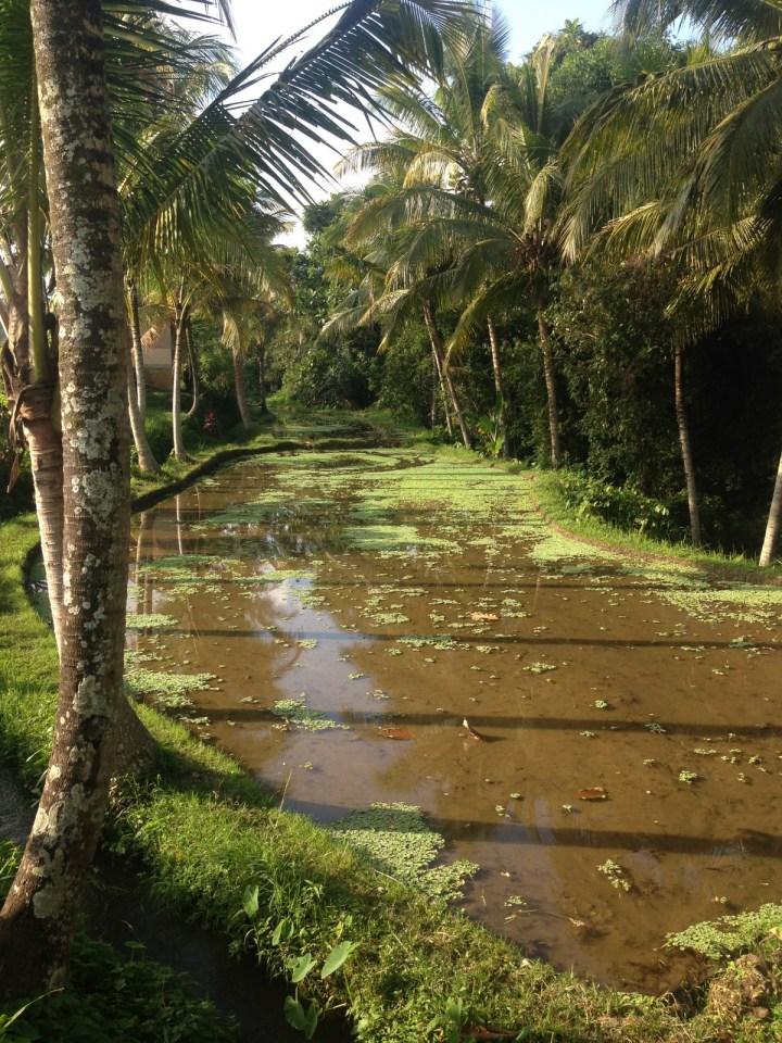rice-fields-ubud-bali-07
