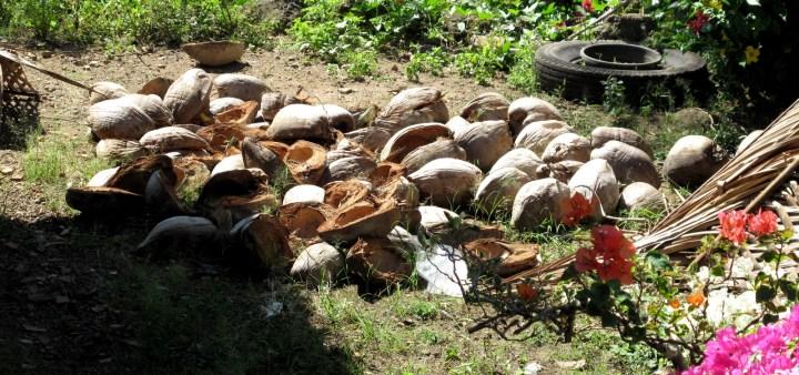 Высушеные скорлупки кокосов используют как дрова.