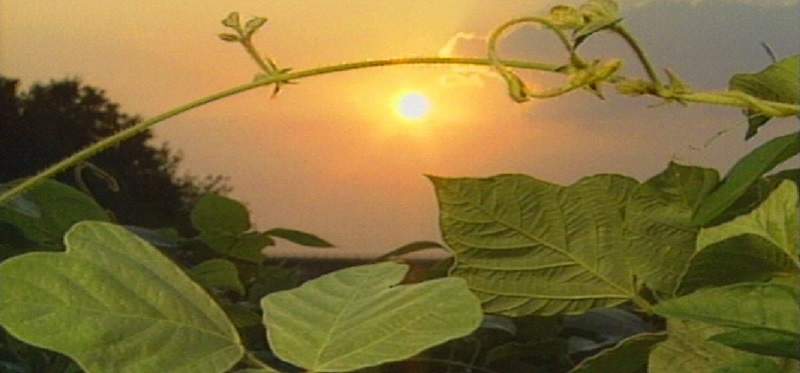 Watch 1996 Kudzu Documentary