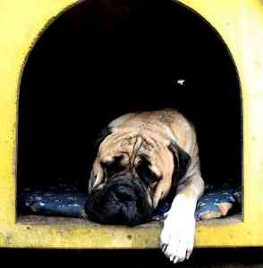 In the doghouse...again
