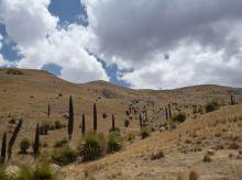 Huara Pasca 3 puya raimondi valle