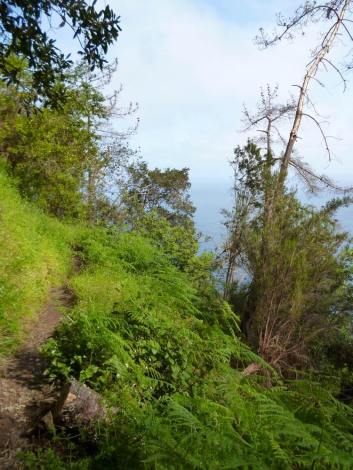 Resize of Vereda do Boca do Risco (02) sentier