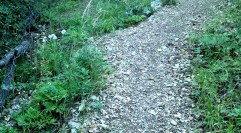 2014-07-12 Ruta dels Refugis (80) Pivoines en graines