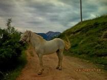 IMG_1161 Pepaj joli cheval fers crochus