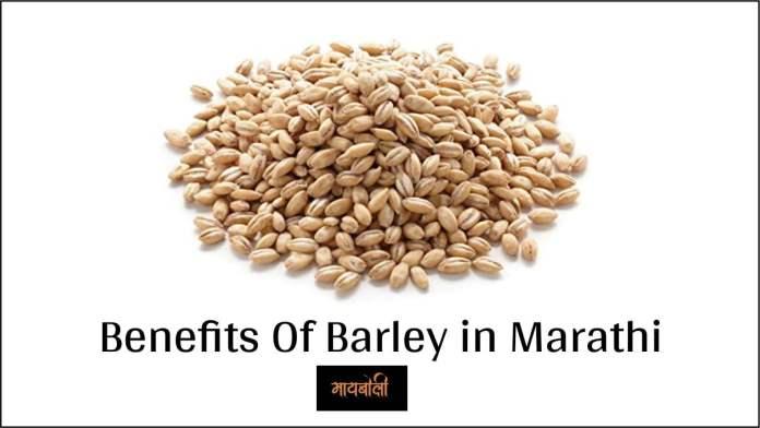 barley in marathi