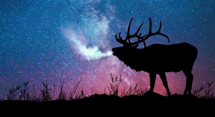As You Learn of Elk, Elk Learn of You <br>by Laurinda Lind