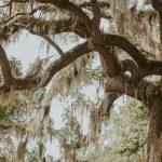 Moss, Savannah, Georgia