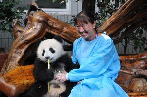 May with a baby panda