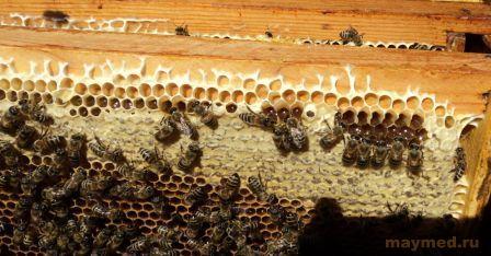 рамки с майским мёдом