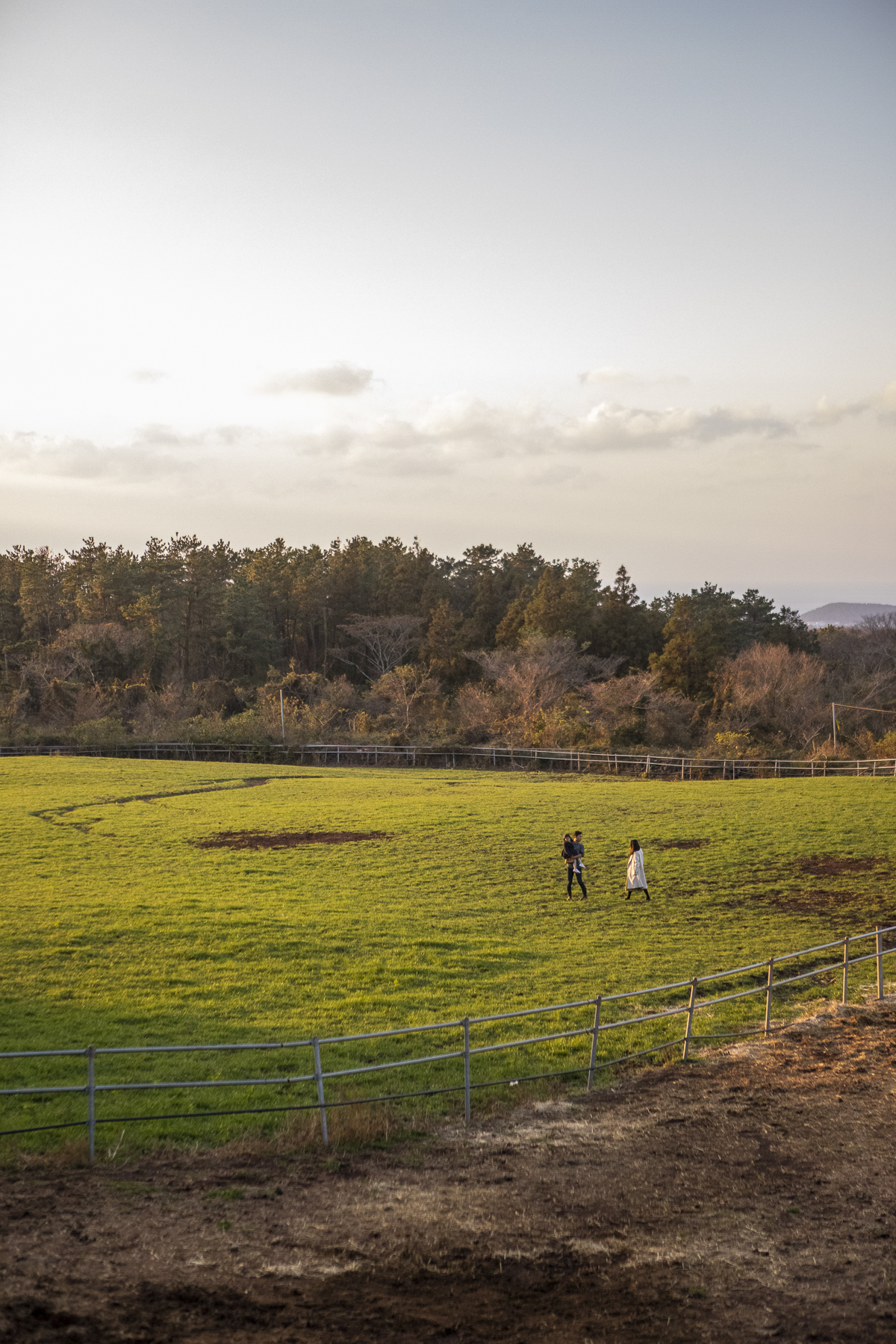 flat meadow and ranch, allowing visitors to observe Jeju's famous horse