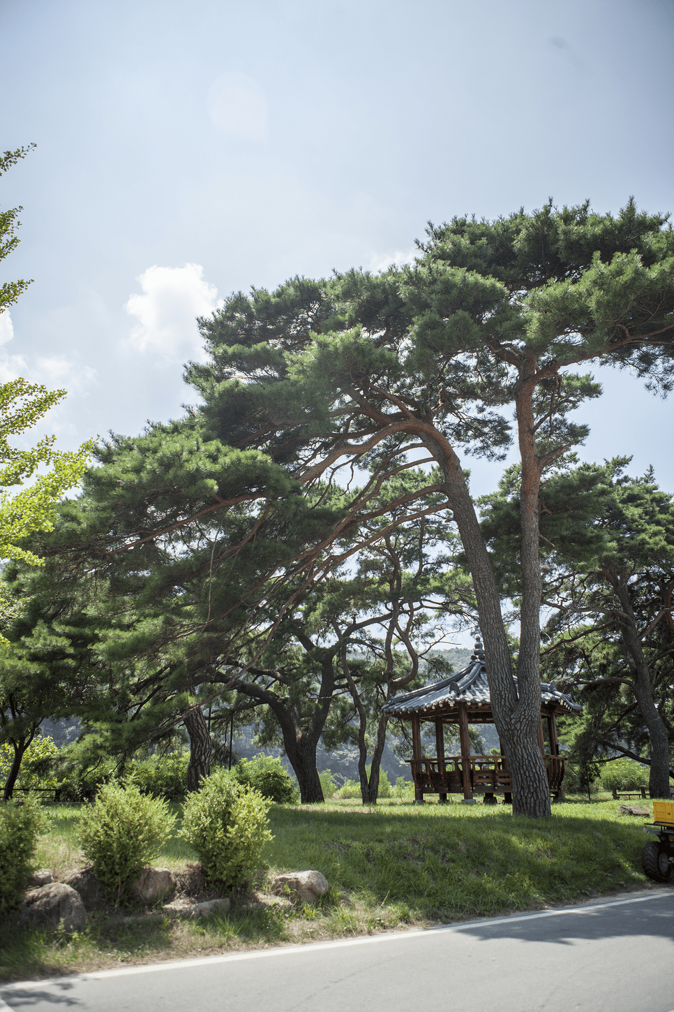 Andong Maae Pine Tree Forest Park