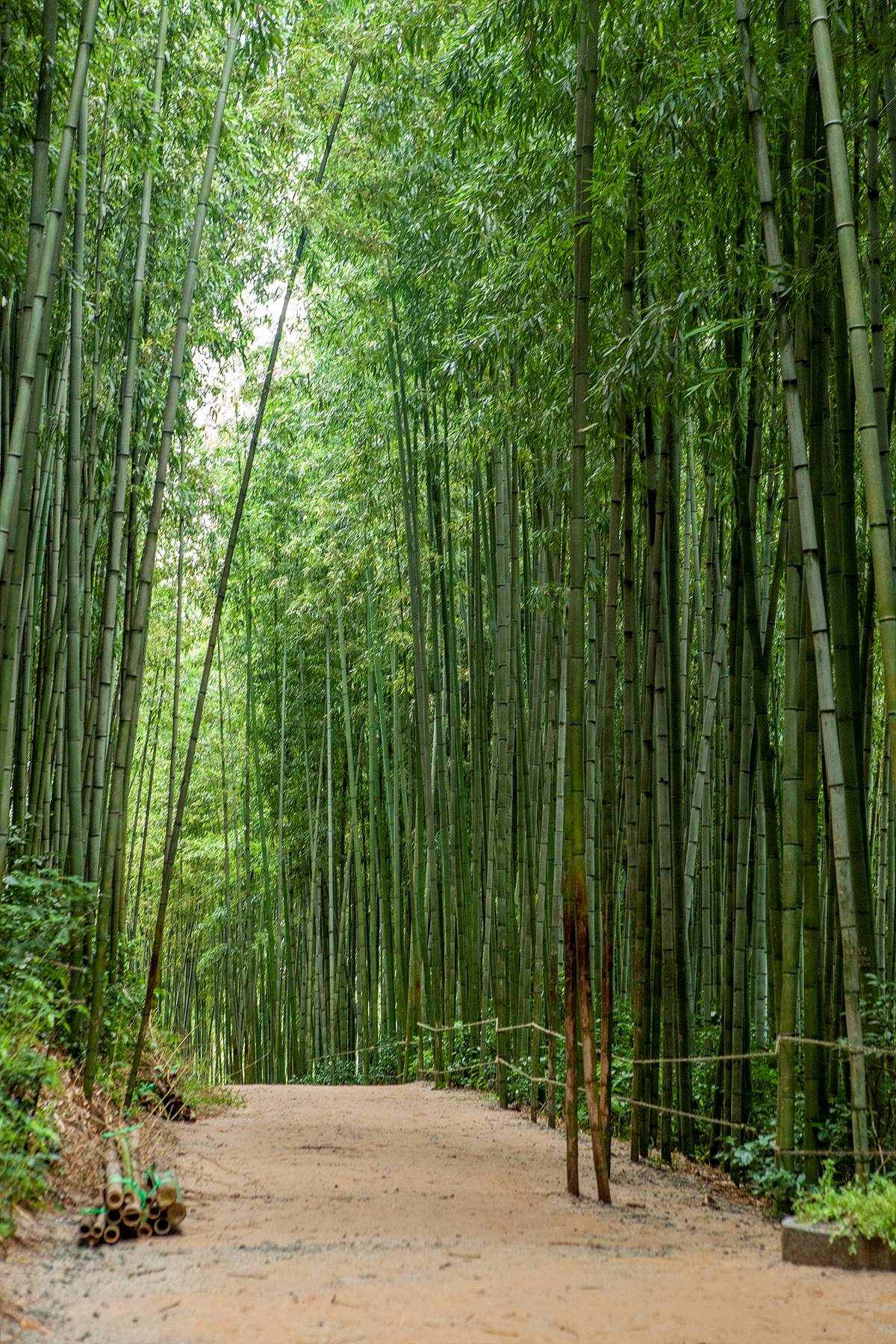 The wind blowing through the bamboo trees relaxes the mind and body, it feels refreshing to feel the sunshine.