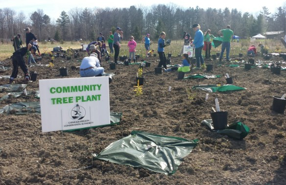 Community tree planting - May 2 2015