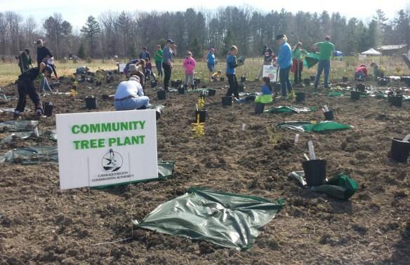 Community tree planting - May 2 2015